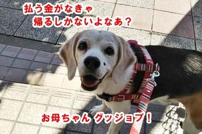 犬ドック 4