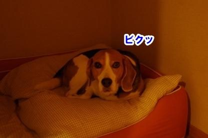 寝込み 2