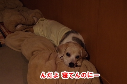 寝込み 1