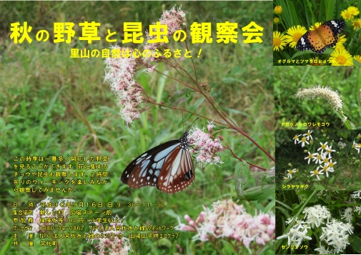 18秋の野草観察会