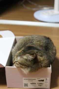 suzu851.jpg