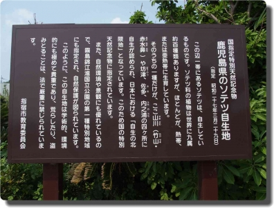 mini_3384_nagasakihana_P8059260.jpg