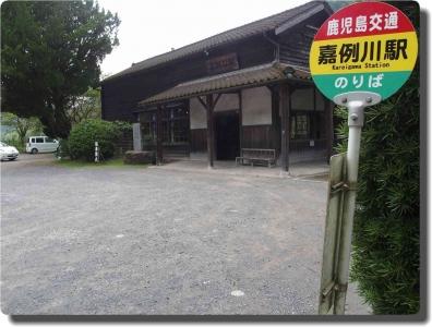 mini_3386_nagasakihana_P8069501.jpg