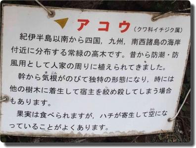mini_43_akou_P8059115.jpg