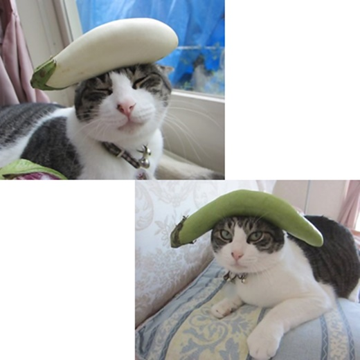 cats_20180929213318883.jpg