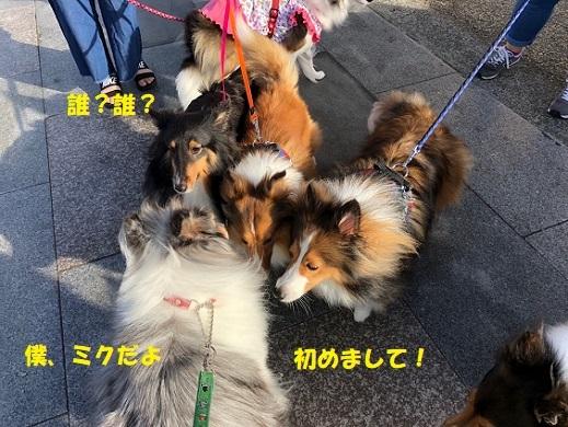 江ノ島散歩1