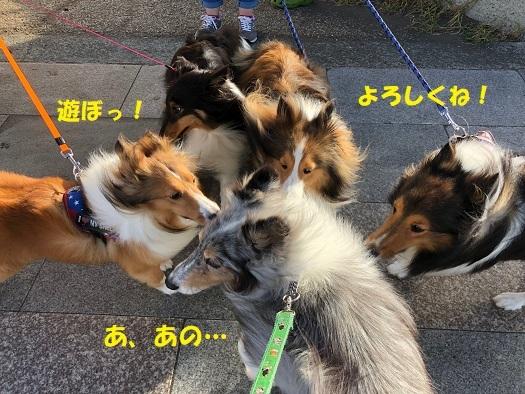 江ノ島散歩2
