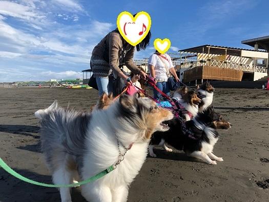 江ノ島海1
