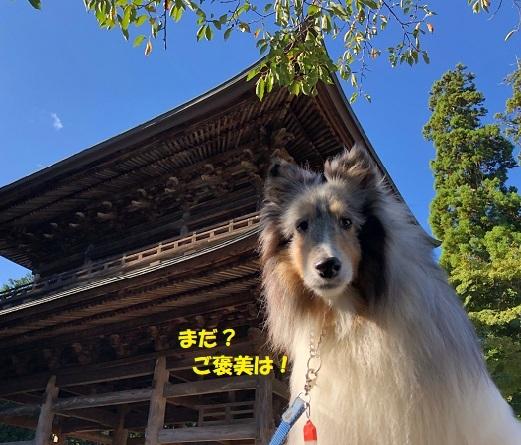 円覚寺71