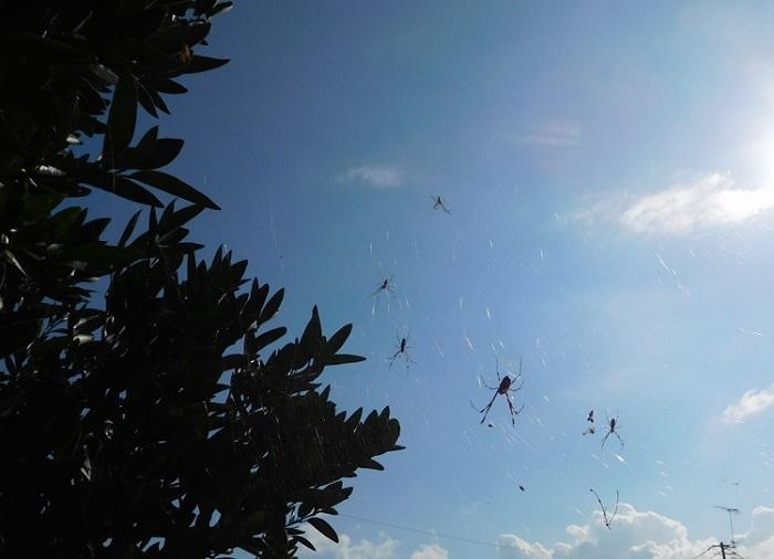 クモの巣いっぱい3010