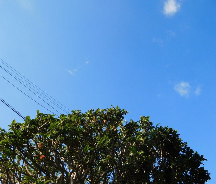 秋晴れ金木犀3010