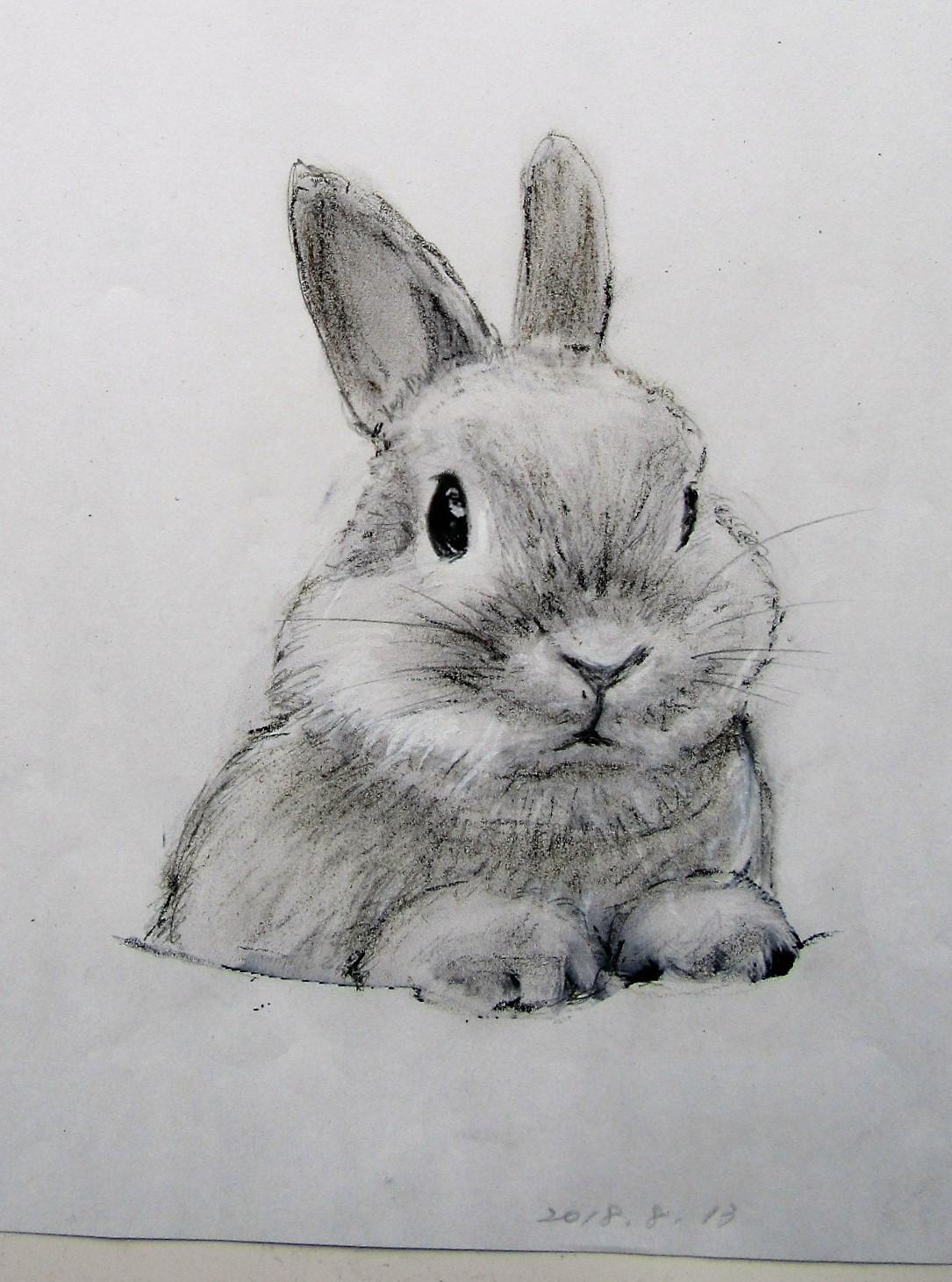 たち耳ウサギ2