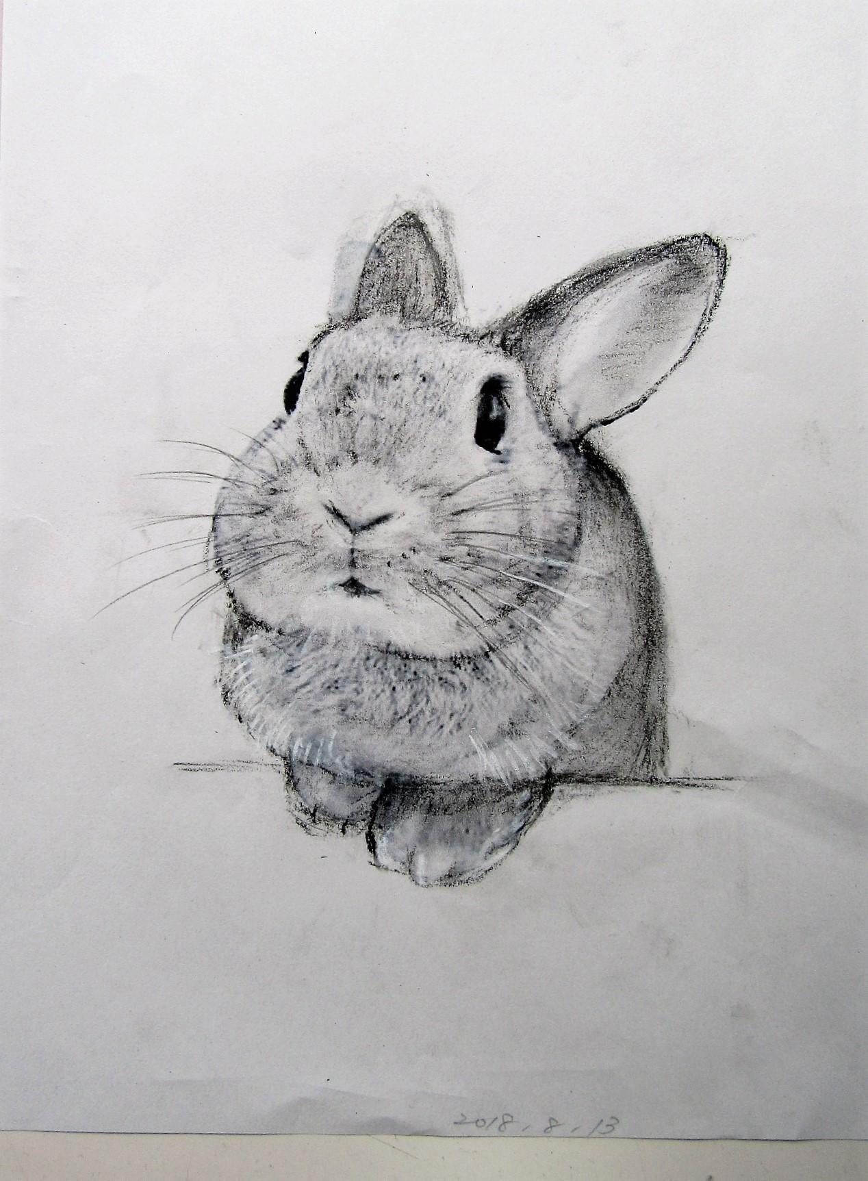 たち耳ウサギ3
