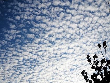 朝のうろこ雲