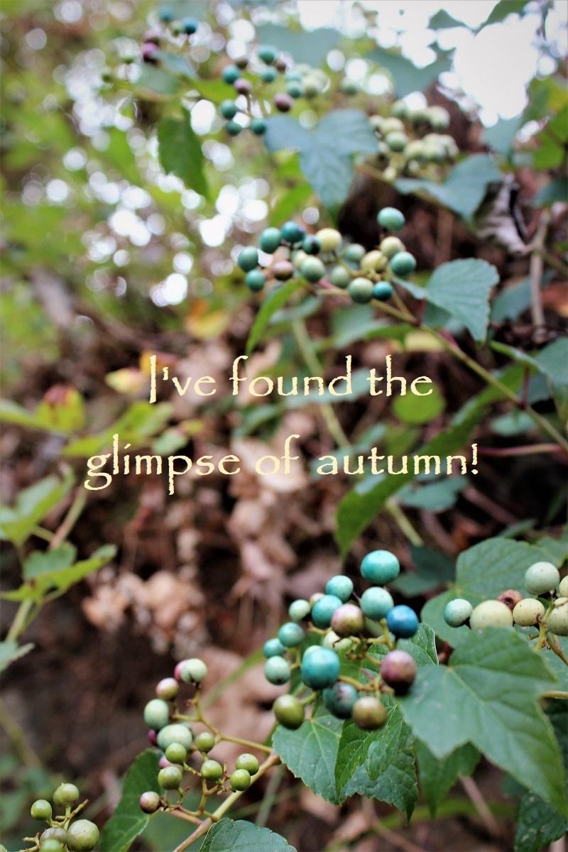 小さい秋見つけた!PC