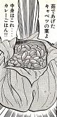 茹でたキャベツの葉でドライカレーを包み込んだ、名づけてロールキャベツおにぎり!