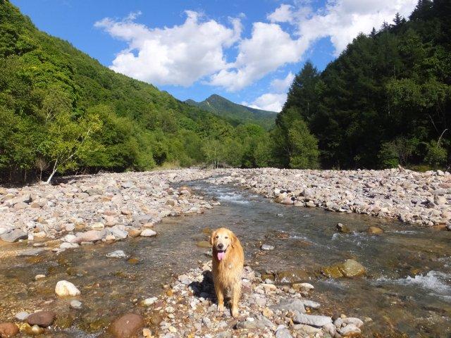 八ヶ岳渓流2018.8.26 011