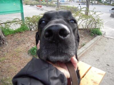 black dog day。