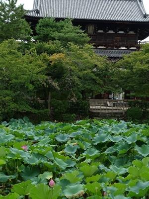 黄檗萬福寺放生池1808