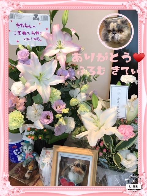 kittyちゃんお花