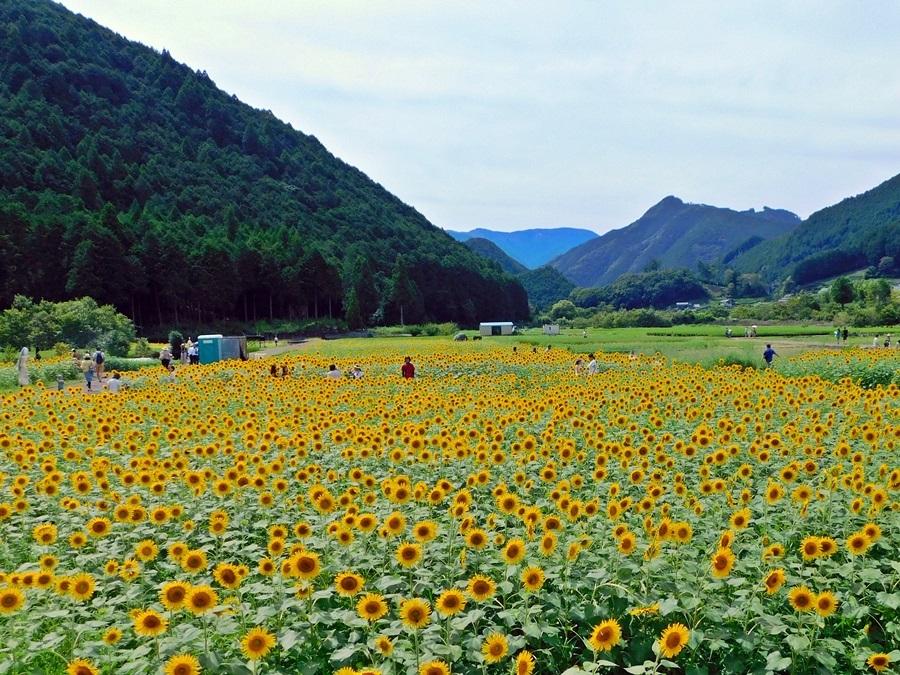 himawari-20180819-20.jpg