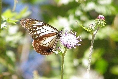 180910 夏花と蝶