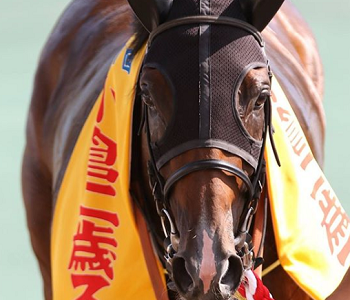 20180830manbaken-horse
