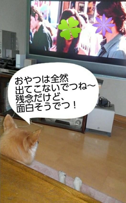 テレビ鑑賞するルー