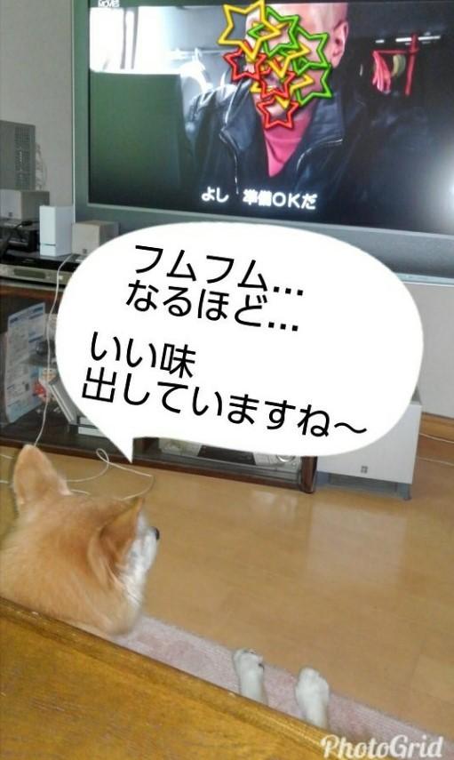 テレビ鑑賞するルー2