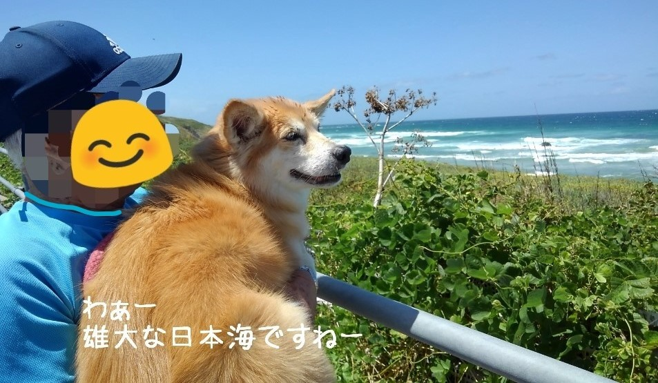 角島から日本海を望む父ルー