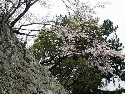 shizuoka38.jpg