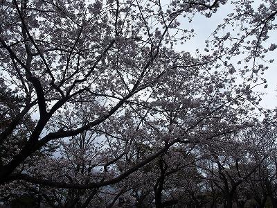 shizuoka45.jpg