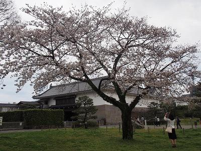 shizuoka49.jpg