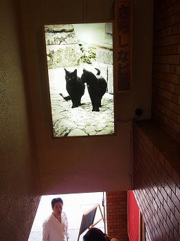 shizuoka72.jpg
