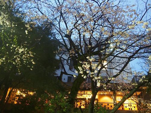 shizuoka83.jpg
