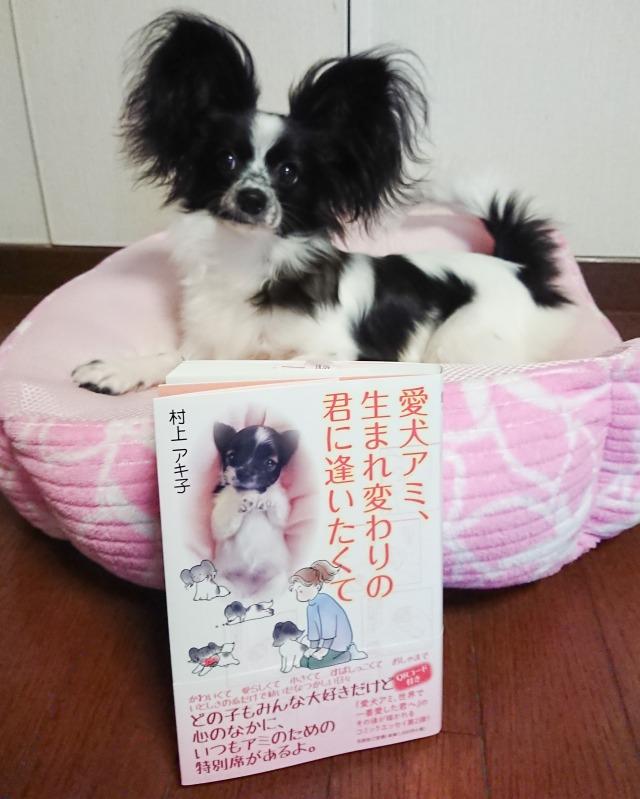 愛犬アミ-1