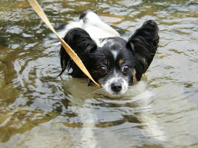 マリィの水遊び-3
