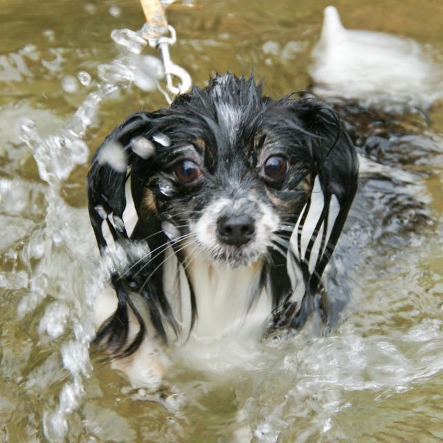マリィの水遊び-7