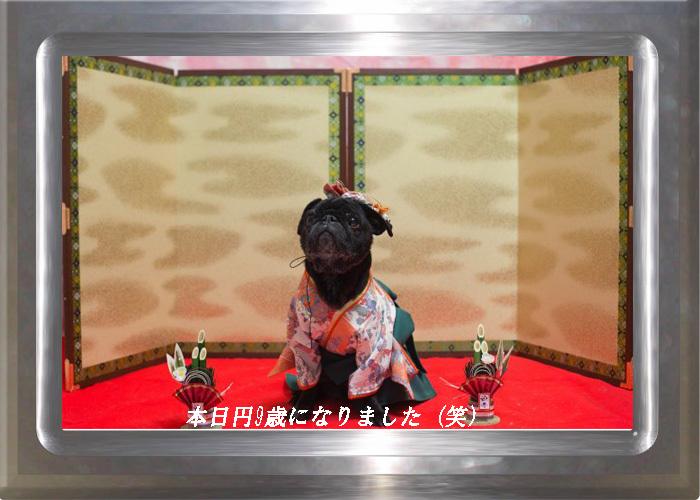 9歳になった円