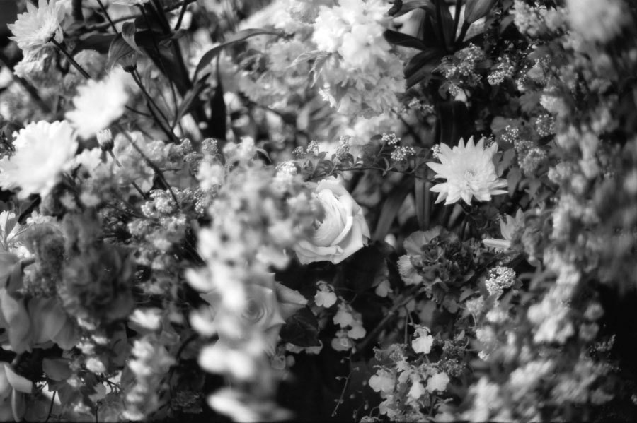 乱舞する花