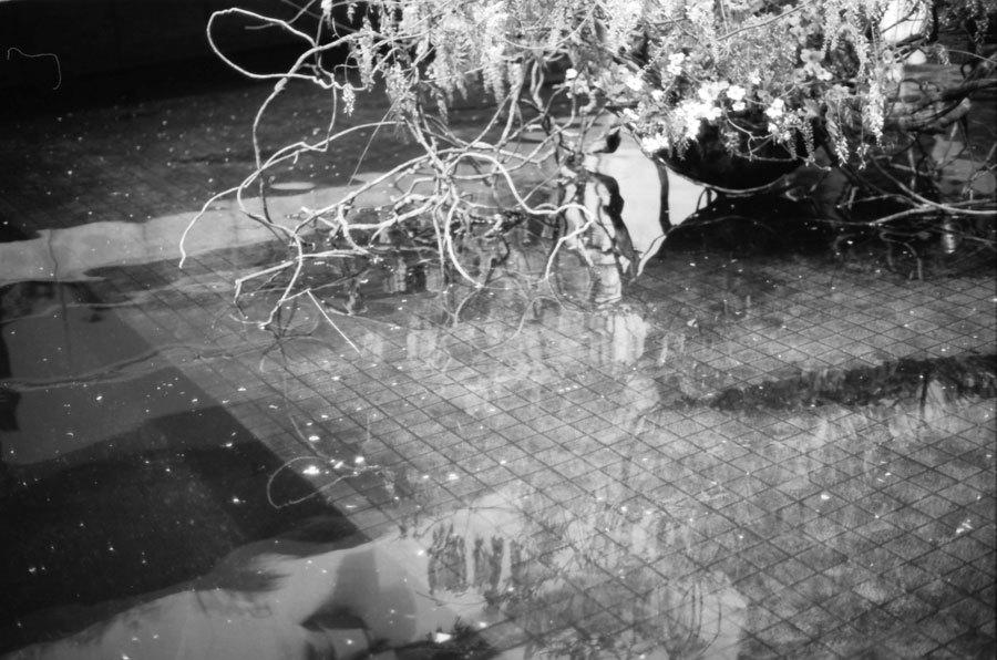 池の上の叢