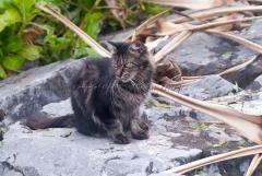 台風 猫 野良猫 沖縄 北谷町 本島中部