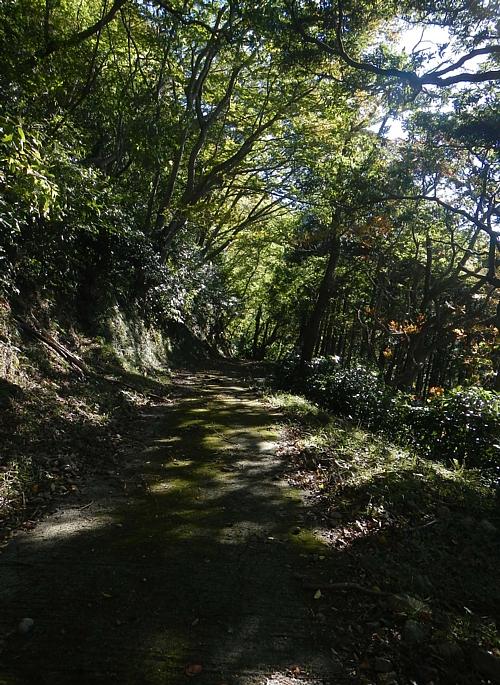 201810_Walking_uchiura_07.jpg