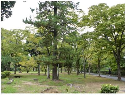 姫路城papa15