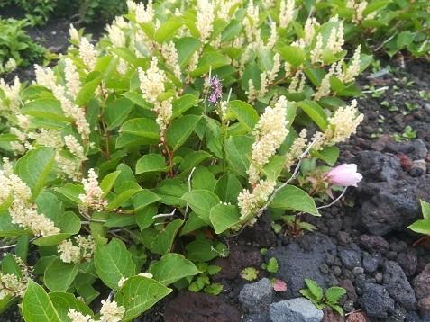 4 高山植物