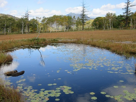 7 植物研究見本園 散策