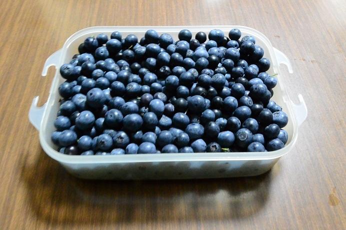 18ブルーベリー収穫_1869a