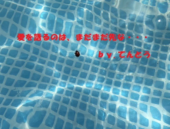 IMG_4201_20180916170801340.jpg
