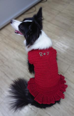 レイの赤いセーター