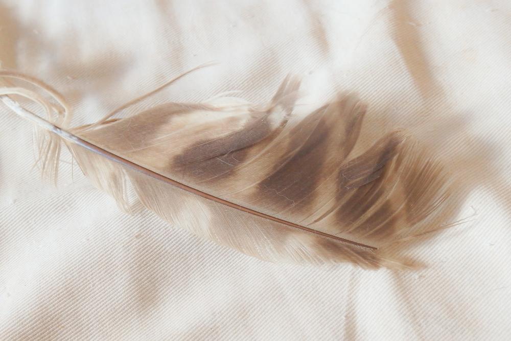 フクロウ羽根